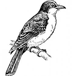bird tyrannidae vector image
