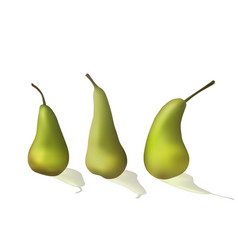 a set of green pears vector image