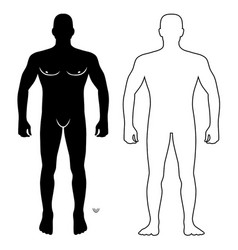 Fashion man body full length front view vector