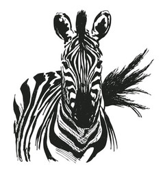 Hand drawing zebra vector