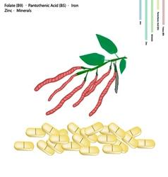 Kidney Bean with Vitamin B9 B5 Iron vector