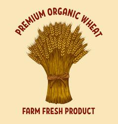 premium organic wheat sheaf wheat in vector image