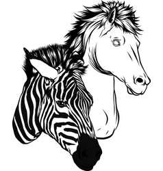 draw in black and white zebra and horse heads vector image