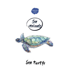 Sea turtle watercolor vector