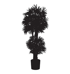 Office and house plant palm silhouette vector image