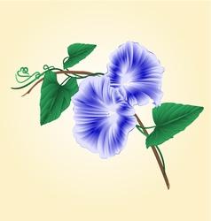 Morning glory blue spring flower vintage vector image vector image