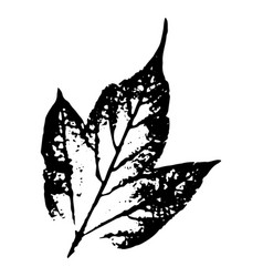 Autumn leaf on a white background vector