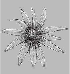 Grey flower 5 vector