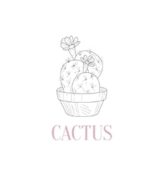 Cactus Home Plant Hand Drawn Realistic Sketch vector image vector image