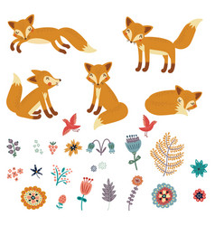 Foxes set characters vector