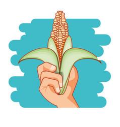 fresh corn healthy food vector image