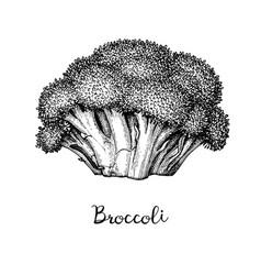 ink sketch of broccoli vector image
