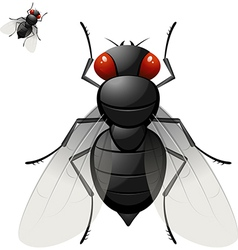 Large fly vector image