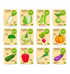 Organic fresh vegetable card label price tag set vector