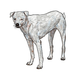 White slim dog vector image