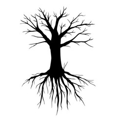 big old tree without leaves vector image