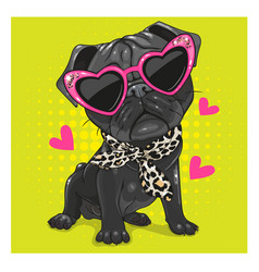 black pug dog with pink glasses and scarf vector image