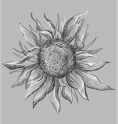grey flower 7 vector image