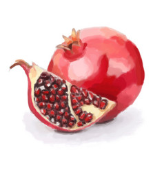 Pomegranate fruit vector