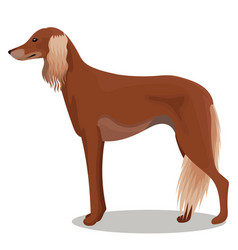 Saluki of persian greyhound vector