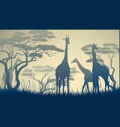 Wild giraffes in african savanna vector