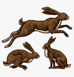 Wild hares rabbits are sitting and jumping vector