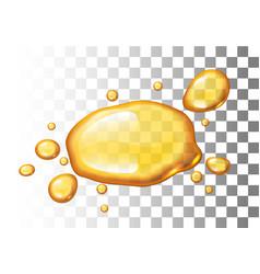 Realistic honey blot on transparent vector