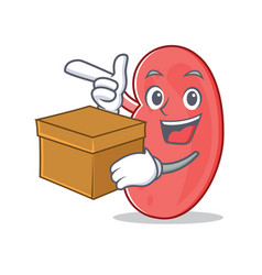 With box kidney character cartoon style vector