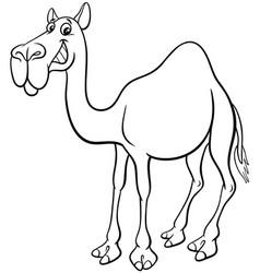 Dromedary camel cartoon animal character coloring vector