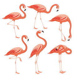 set of pink flamingos vector image