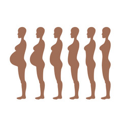 Stages of development of pregnancy of the woman vector
