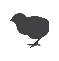 Black chick isolated on a white background vector image