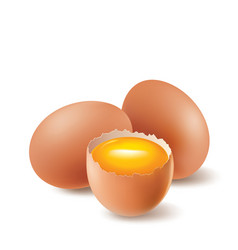 Chicken eggs and egg yolk vector
