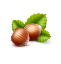 full unpeeled realistic hazelnuts with leaves vector image