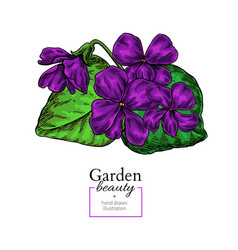 violet flower drawing hand drawn floral vector image