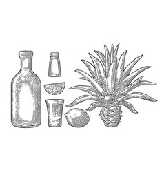 glass and botlle of tequila cactus salt lime vector image vector image