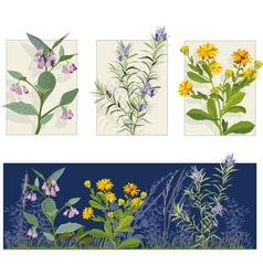 herbs vector image vector image