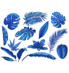 blue tropical leaves exotic palm tree leaf vector image