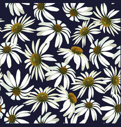 chamomile flowers seamless pattern vector image