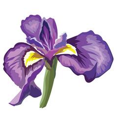 flower 9 vector image