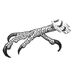 Gerfalcon claw vintage vector