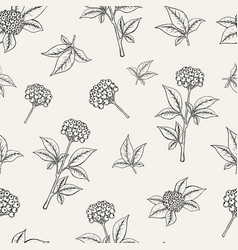 Lovely botanical seamless pattern with ginseng vector
