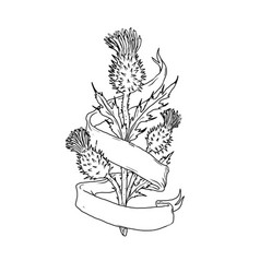 Scottish thistle with ribbon drawing black and vector
