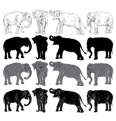 Set of wild elephant isolated vector image