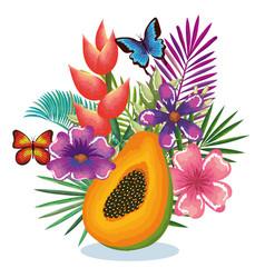 tropical garden with papaya vector image