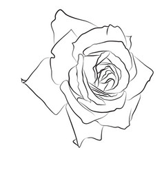 Beautiful hand drawn sketch rose isolated black vector