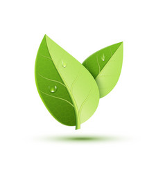 green leaf icon organic eco symbol nature vector image