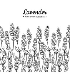 Lavender drawing border isolated wild vector