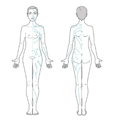 Lymphatic Massage vector image