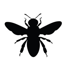 silhouette a honey bee contours a wasp vector image
